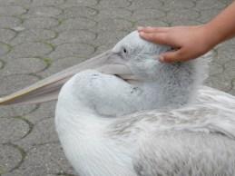 2011-07-28 Vogelpark Walsrode 07-181 L+Pelikan