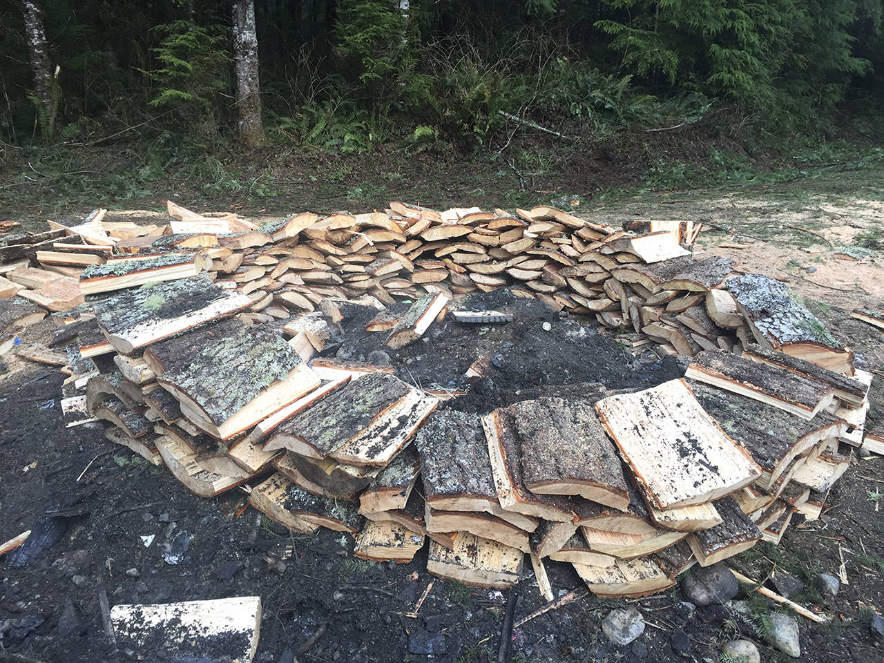 2 Arrested On Suspicion Of Illegally Cutting Down Douglas Fir Trees