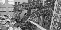Giraffe Manor (Kenya)