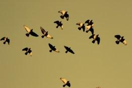 32nd Street Flock