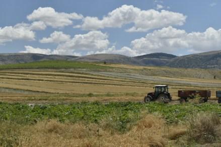 Fields, tractor