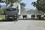 Kamaz Truck and cattle in the road - Azerbaijan I think.