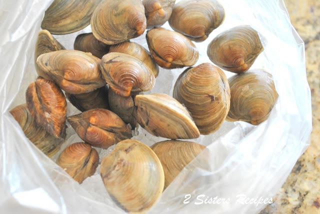 Fresh clams sitting on ice in a bag by 2sistersrecipes.com