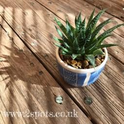 2Spots cactus pot