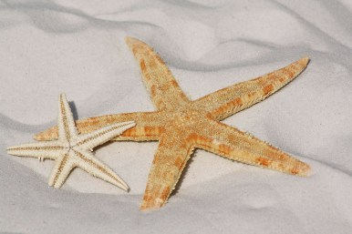 starfish_ubodnar
