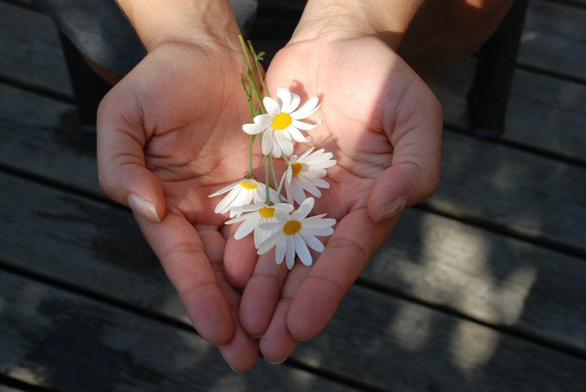 daisy-gift_GLady