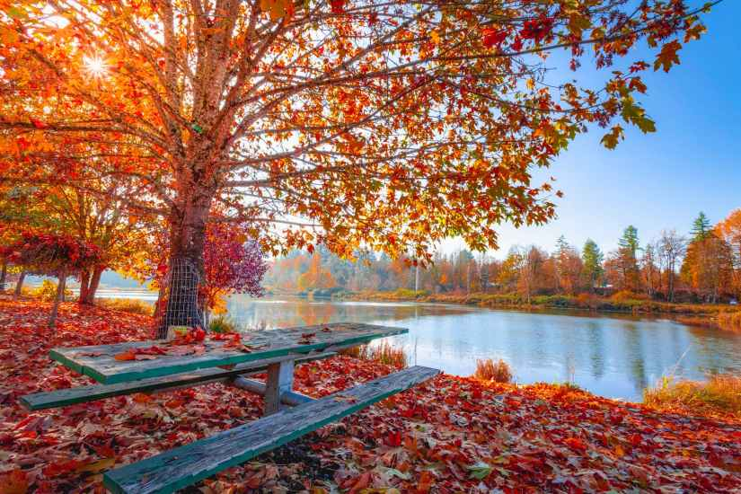 red and orange autumn leaves on the ground and on trees beside body of water