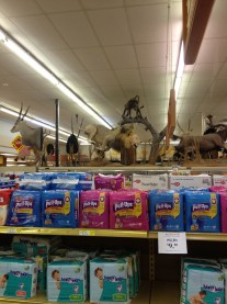 Archie's Grocery in Splendora had TONS of mounted game animals.