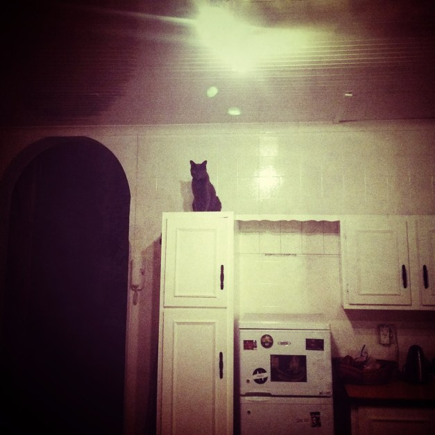 cat on cabinet