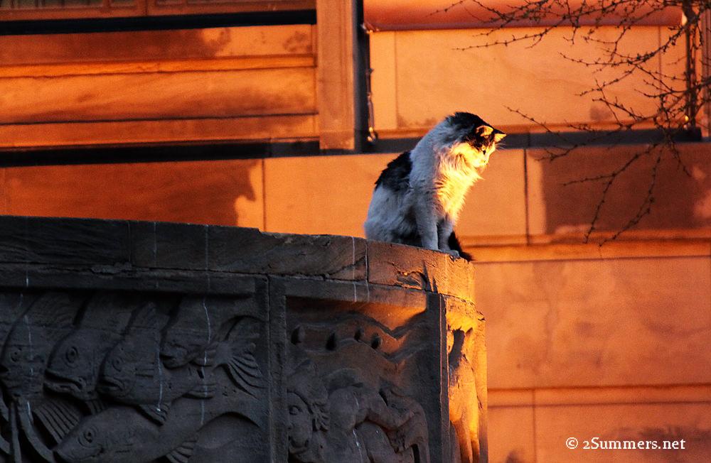 Cat looking down