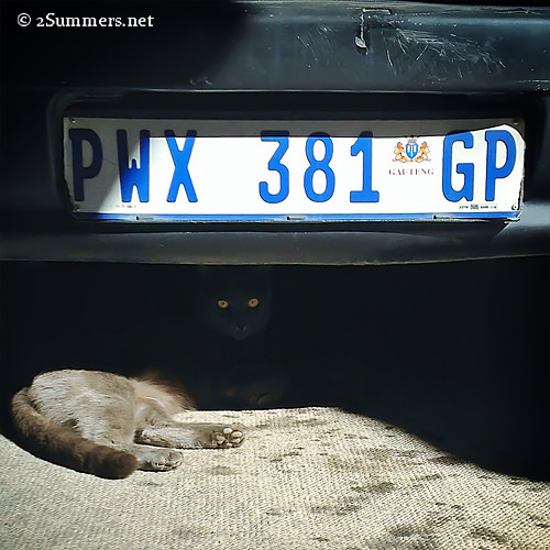 Smokey under car