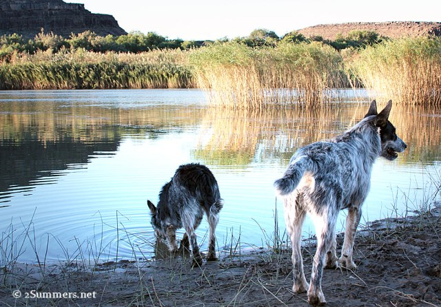 Orange River and dogs
