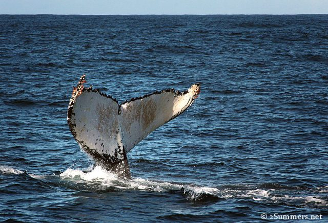 Whale tail2