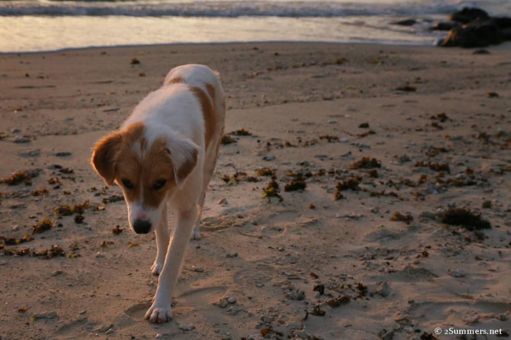 Belle Mare dog