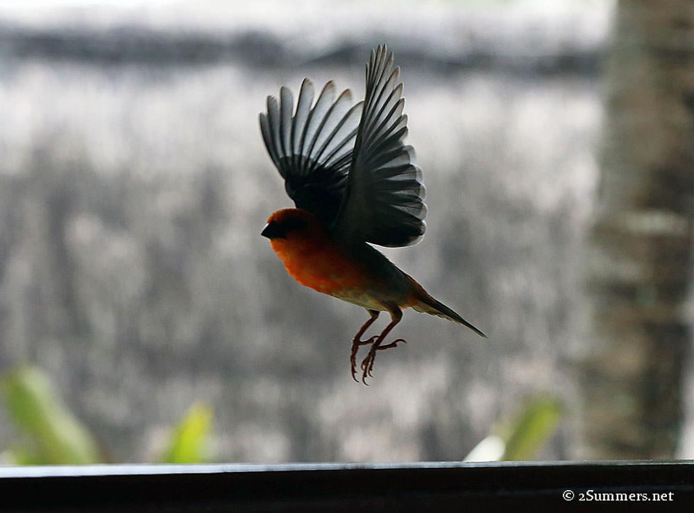 Prince-Maurice-bird