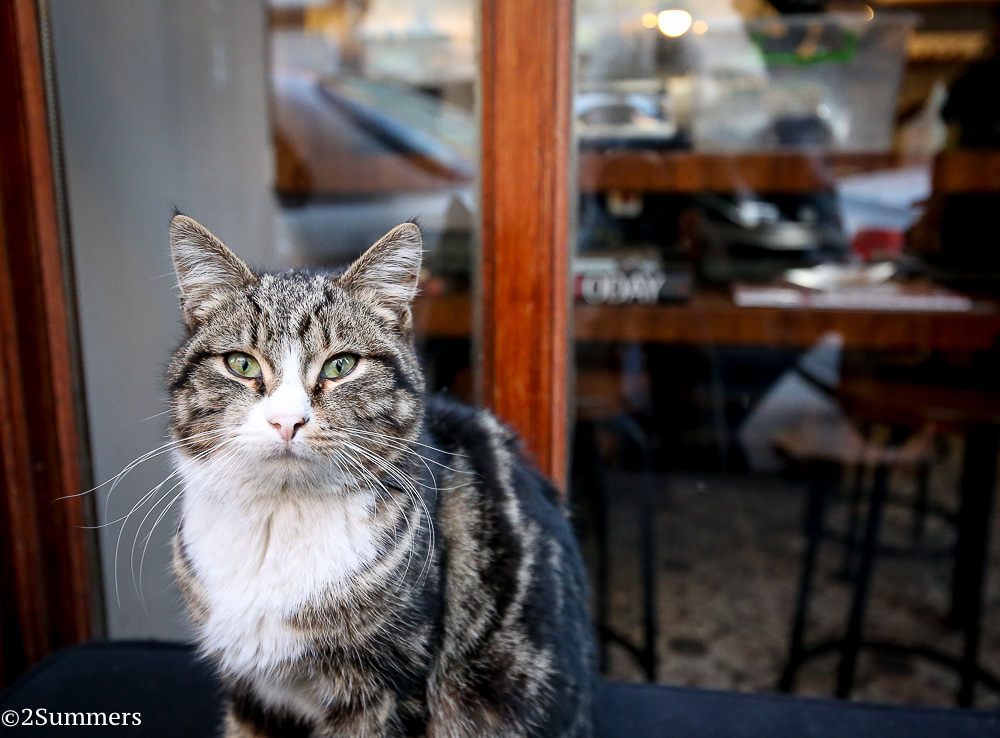 Istanbul cats-9963