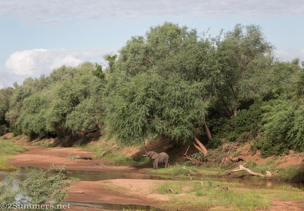 Elephant eating in Pafuri