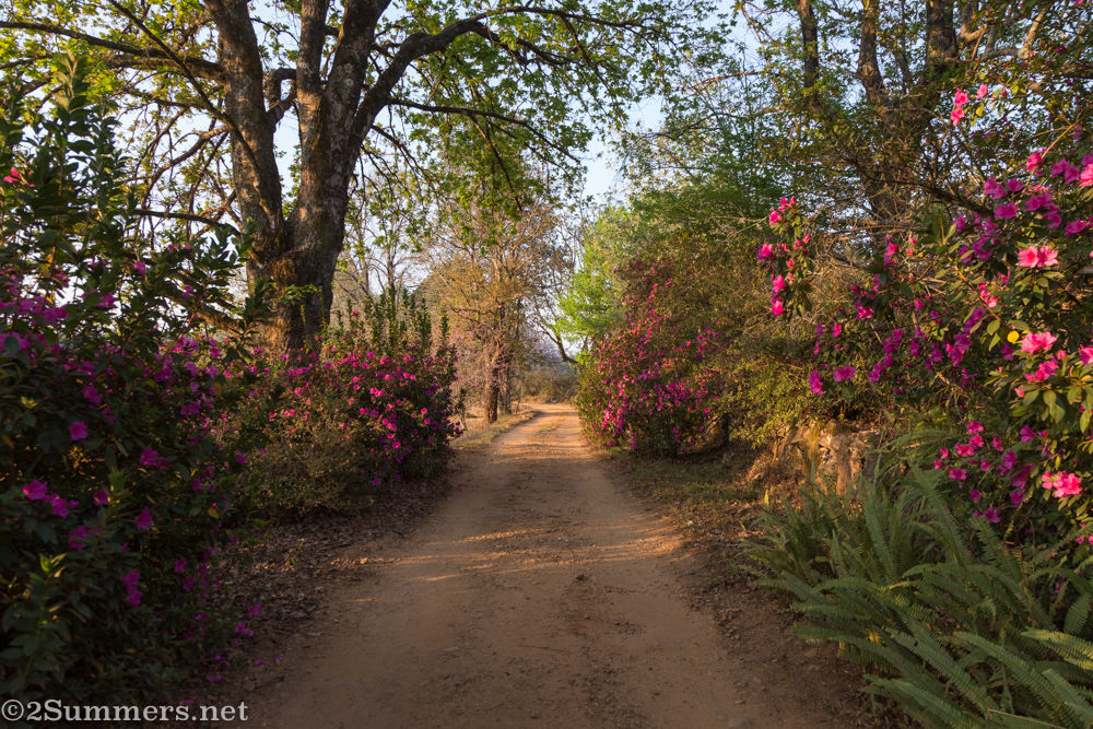 The lane at Blueberry Heights in Magoebaskloof