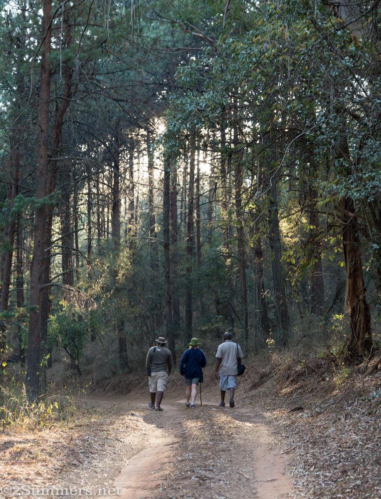 Kurisa Moya forest