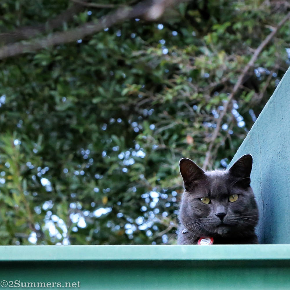 The Melville Cat on the roof