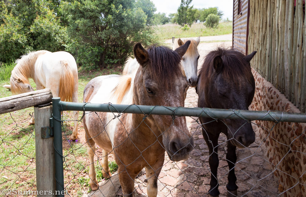 Ponies at the gate