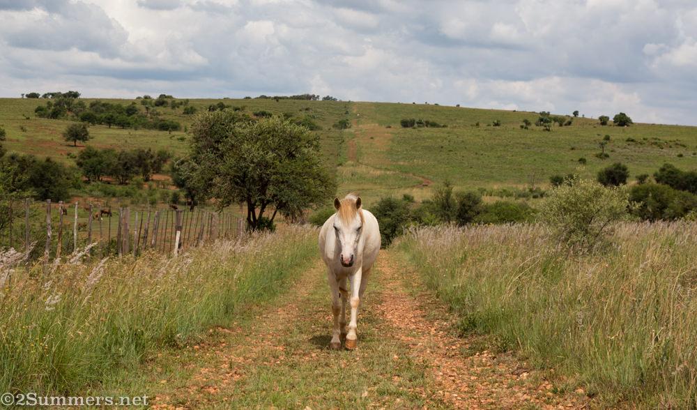 Pony on the path