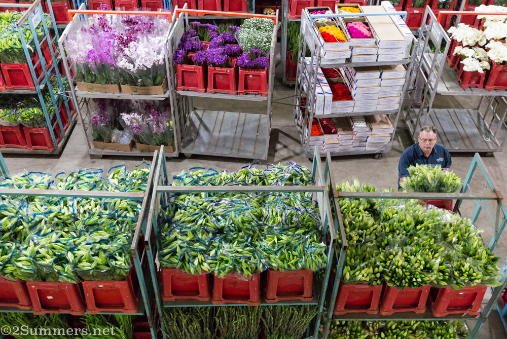 Flowers ready for auction at Multiflora