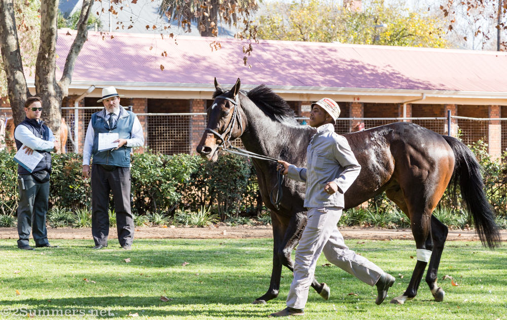 Staging area for horses at Turffontein