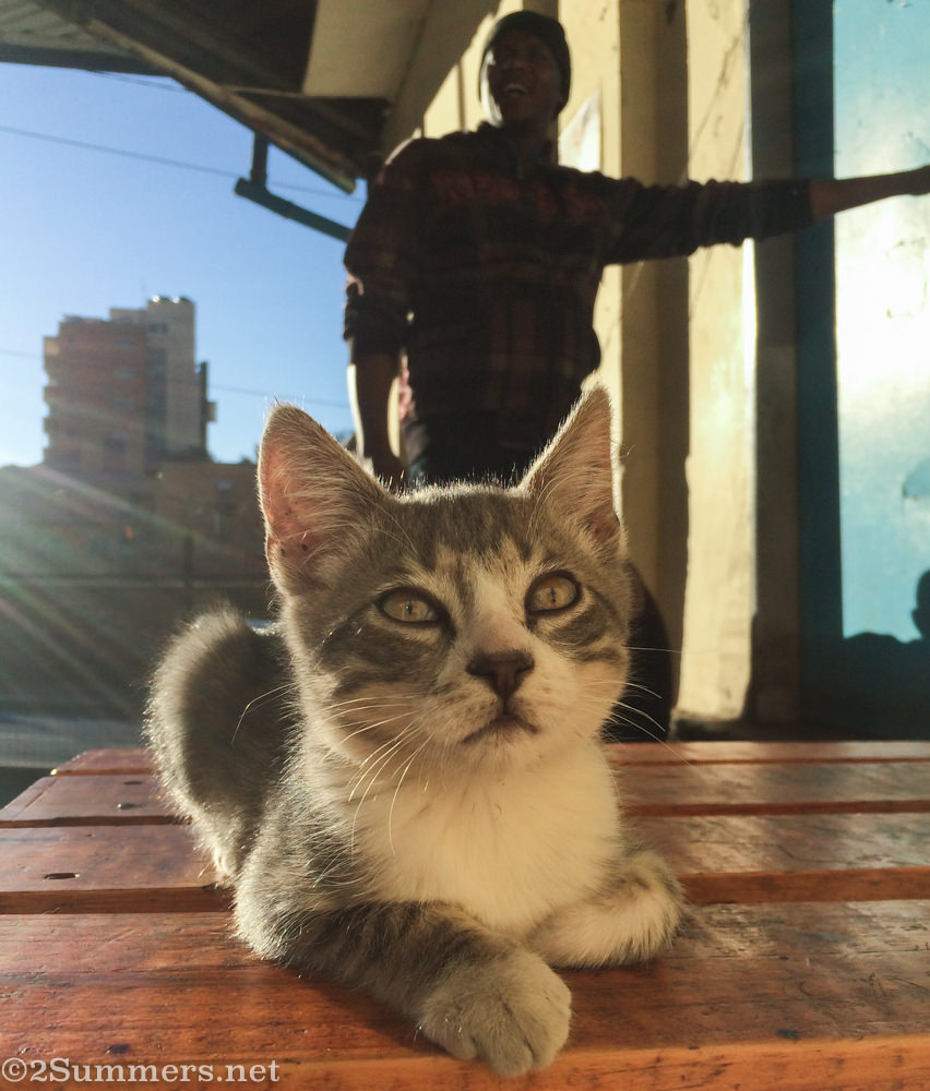 Nippy the Hillbrow kitten