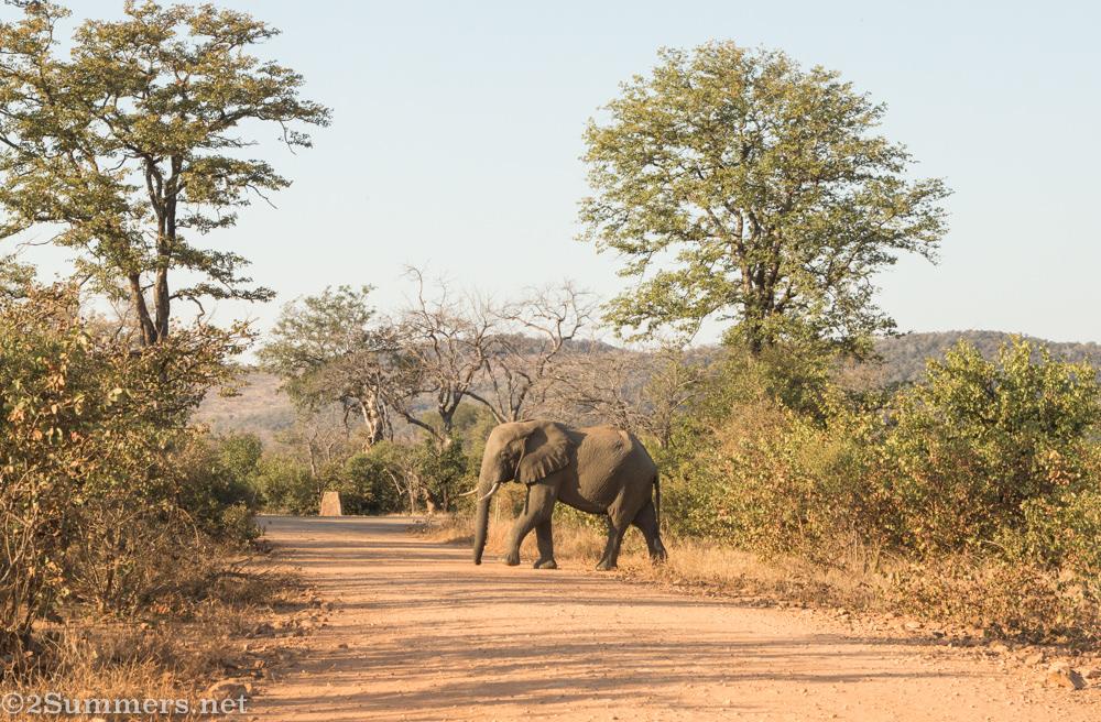 Elephant in northern Kruger