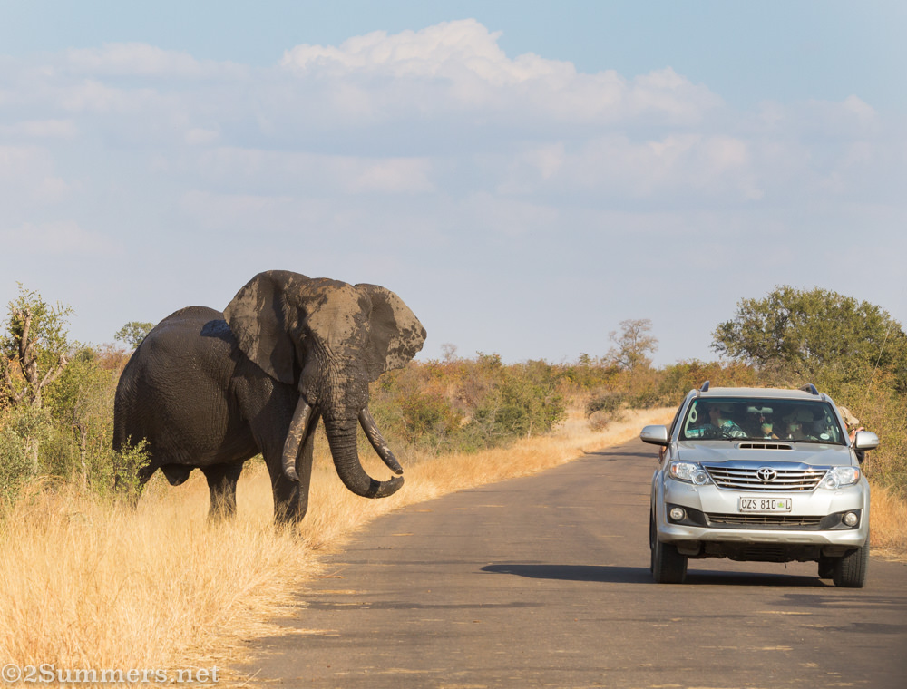 Mud-covered elephant and car