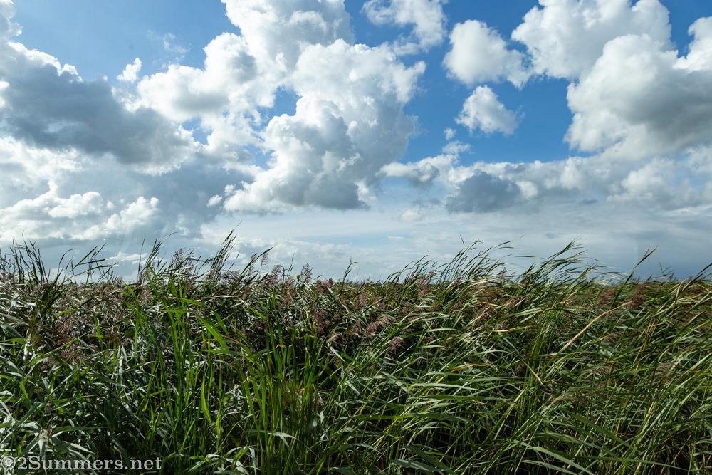 Sea grass near Grou in the Netherlands