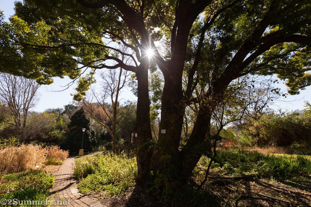 Winter in the NWU Potch Botanical Garden