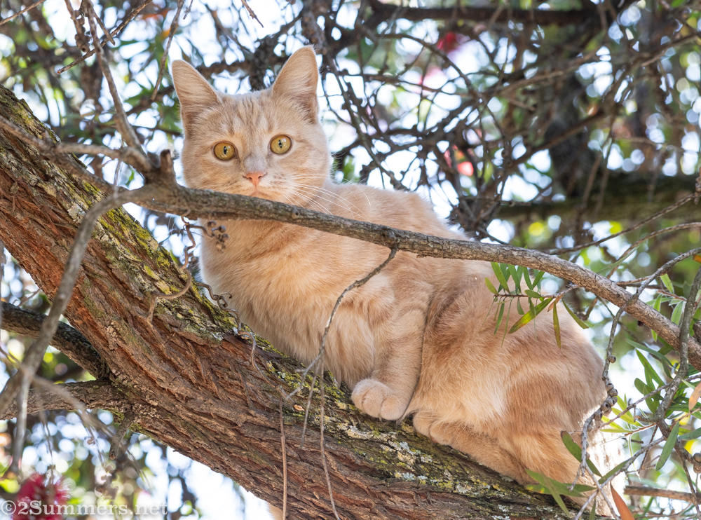 Trixie in a tree at one year old.