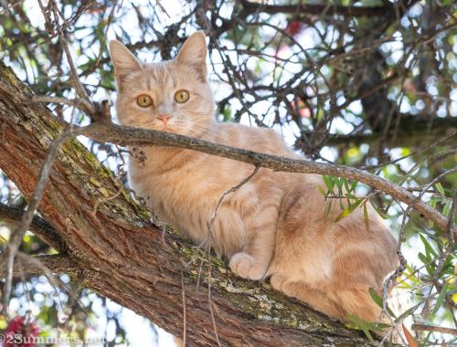 Trixie the Melville Kitten in a tree