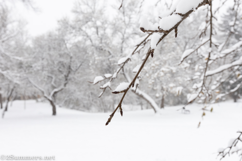tree branch in snow
