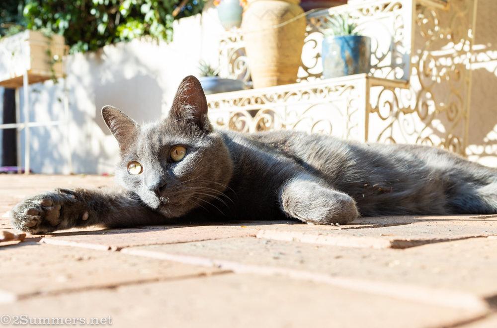 Melville Cat reclining.