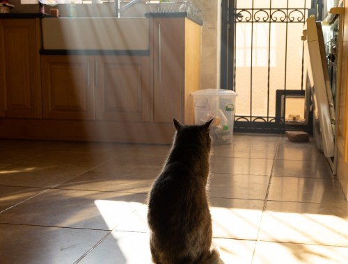Smokey in the kitchen