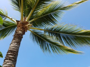 Palm Trees are boss here
