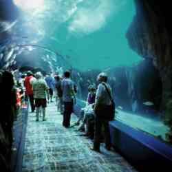 Georgia Aquarium fish tunnel