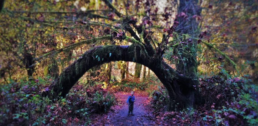 Bent Tree Hoh Rainforest Olympic National Fall leaves 2 header