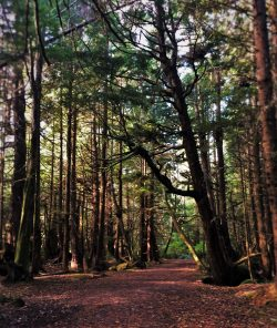 Cape Flattery hiking in Forest 1
