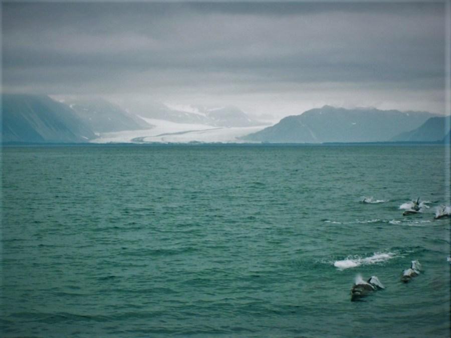 Dolphin Pod by Glacier Kenai Fjords National Park Alaska