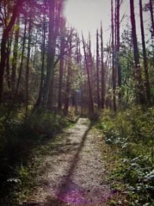 Hiking Trail San Juan Island