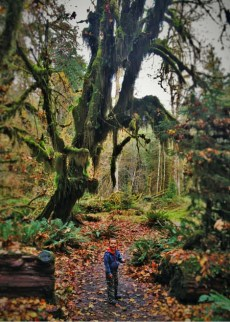 LittleMan Hiking at Hoh Rain Forest in Olympic National Park 2traveldads.com (1)