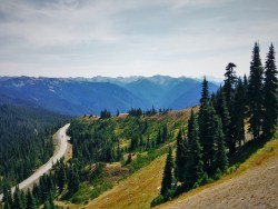 Road to Hurrican Ridge 1