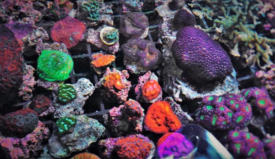 Coral Farm Tank Behind the Scenes Georgia Aquarium 2