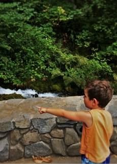 LittleMan at Wahkeena Falls Columbia Gorge Oregon