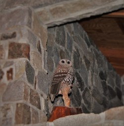 Owl Sculpture in Performance Hall at Sleeping Lady Resort Leavenworth WA 1