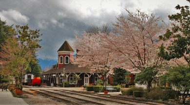 Old Snoqualmie Train Depot with Cherry Blossoms Washington 10